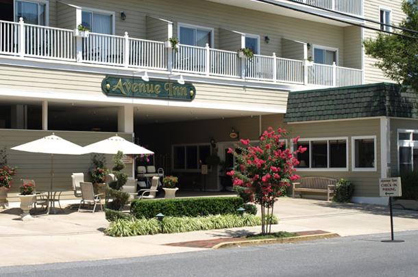 Dog Friendly Hotels In Rehoboth Beach Delaware