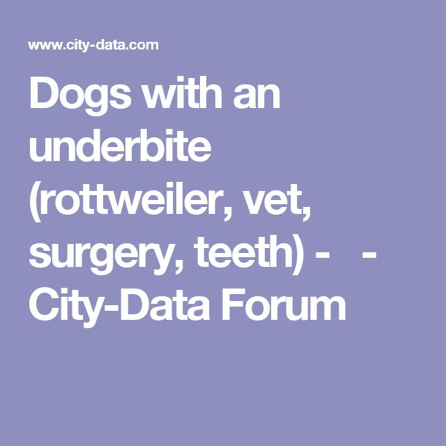 Dogs with an underbite (rottweiler, vet, surgery, teeth) -  -  City-Data Forum