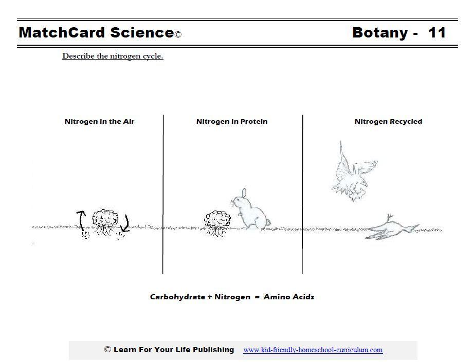 Nitrogen Cycle Worksheet Science Pinterest Worksheets Science