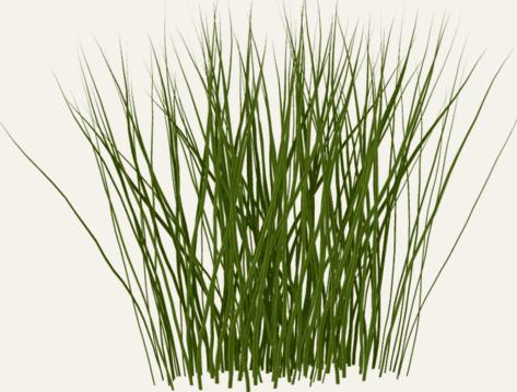 3d Shrubs Google Search Plants Diy Artificial Turf Ornamental Grasses
