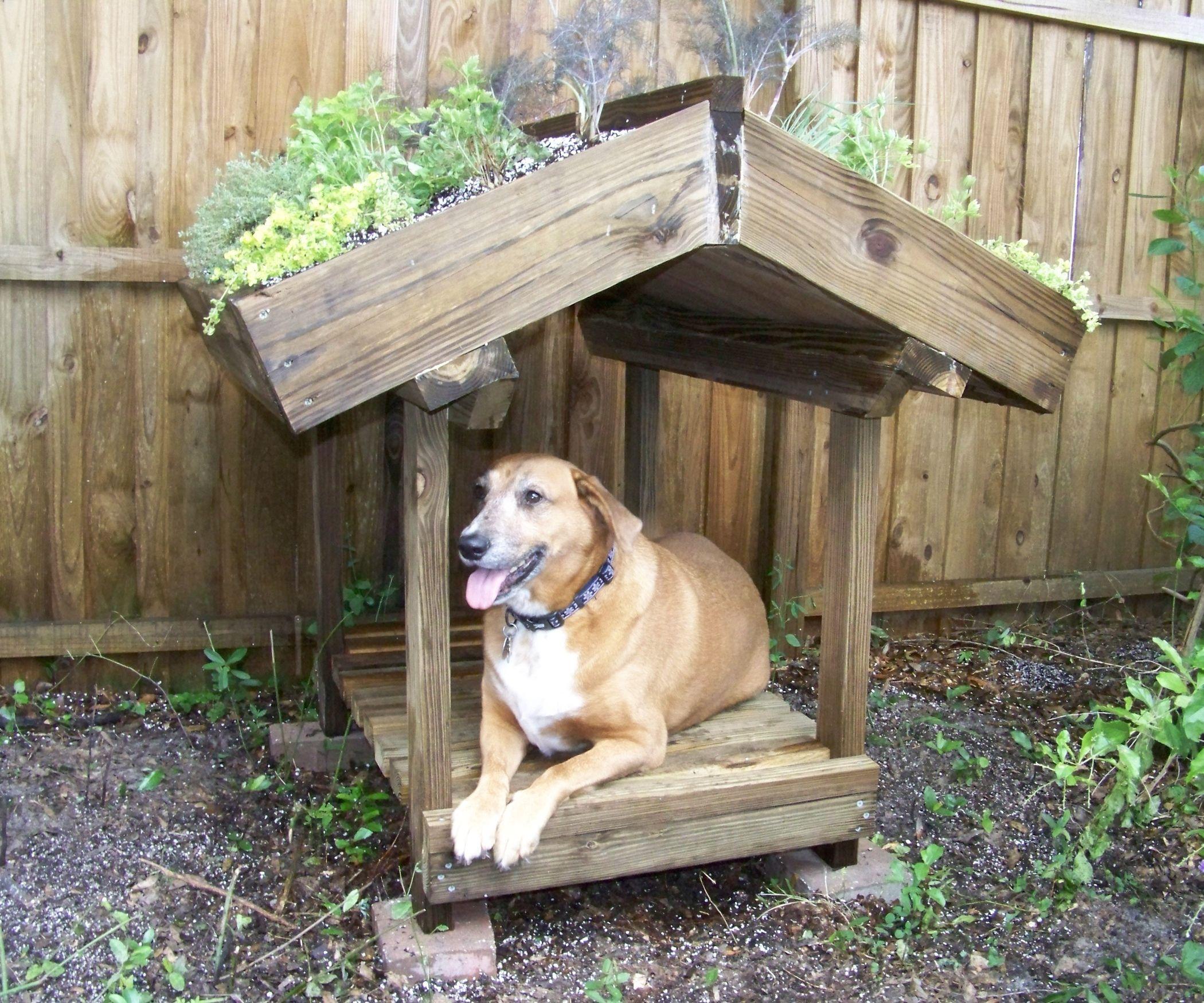Photos De Verandas En Bois green roofed dog veranda | veranda bois, veranda et bois