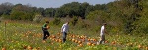 Pumpkin Patch & Maze: Open to the public every weekend in October.  Admission: $1 per person Activities include: • Pumpkin Picking $2.00 – $20.00 (based on size) • Hayride $3.00 per person (age 2  and up) • Horse rides $3.00 (hours are limited to Saturday from 11am to 4pm; Sunday from 1pm to 5pm) • Scarecrow Factory $10.00 (includes materials to make the scarecrow & you take it home) • Gem  Mine $2.00 – $5.00 per bucket • Fish & Turtle Feeding ($2.00 per snack bag)