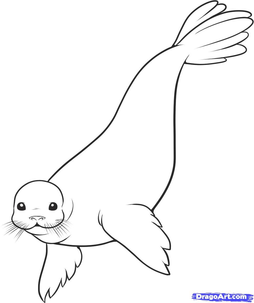 How to Draw a Seal, Step by Step, Sea animals, Animals, FREE ...