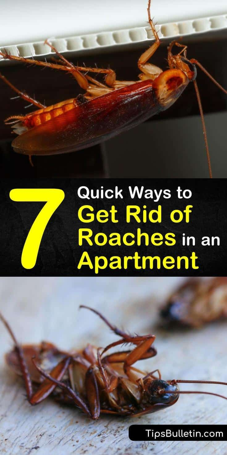 7 Quick Ways To Get Rid Of Roaches In An Apartment Homemade Hummingbird Food Roach Infestation Kill Roaches