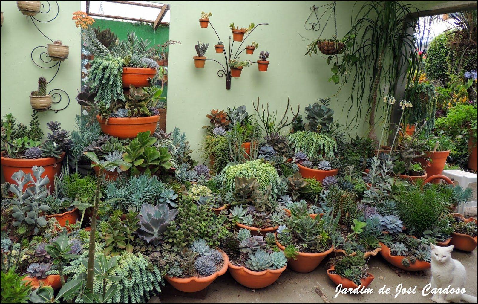 Jardim de cactus suculentas by josi cardoso cuidados com for Cactus cuidados exterior