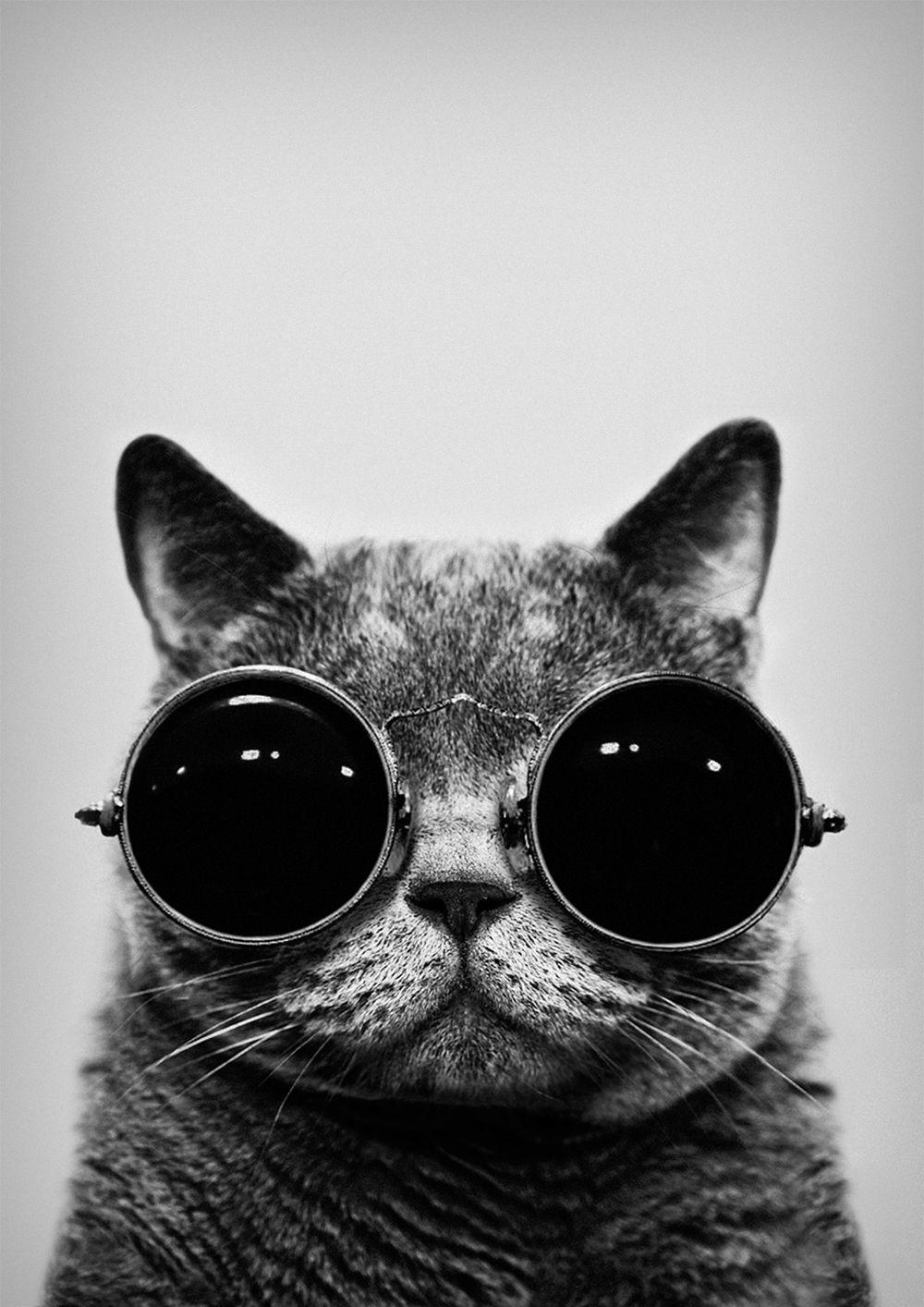 Black White Iphone Wallpaper Tumblr Grunge Cat Hipster Phone