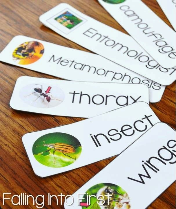 Insect unit  Vocabulary words    New Teachers   Insects, Science