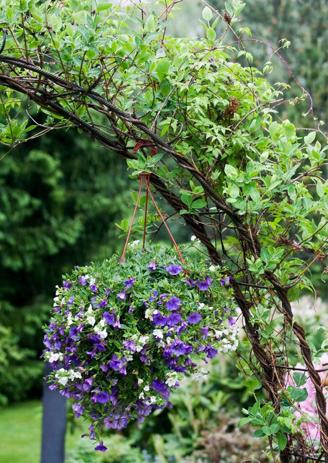 Monet lämpöä vaativat kesäkukat viihtyvät mainiosti ruukkupuutarhassa. Katso Viherpihan vinkit ja poimi parhaat ideat omalle pihalle!