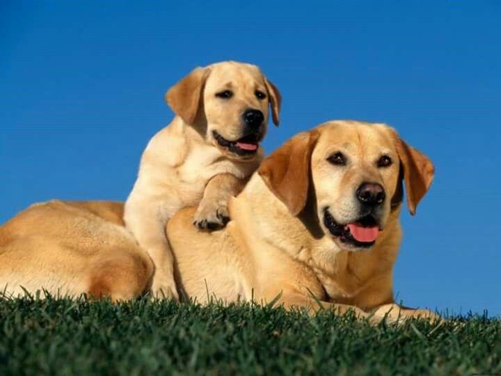 E poi Dio inventò il cane, per dimostrare agli uomini che esiste la fedeltà eterna. diventa fan di Amore e delusione (FRASI)