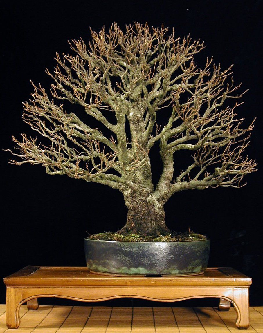 Pin by Kenny on Bonsai trees | Pinterest | Bonsai