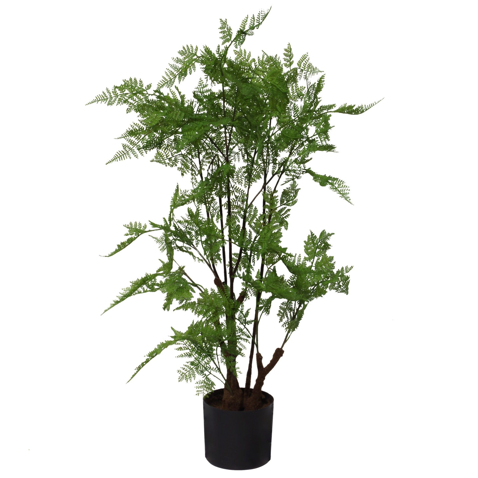 Price: £39.99 90cm Artificial Natural Moss Base Fern Foliage Plant Leaf Artificial Plants This artificial moss base natural fern plant measures 90cm tall x 50cm x 50cm when arranged as we have it in our pictures. Comes fully potted in a plastic pot, ready to display (planter measures 15cm wide x 13cm tall). Fully wired stems ready to be arranged to fit your space perfectly. Pot material: Plastic. Leaves: Plastic. #ArtificialPlants