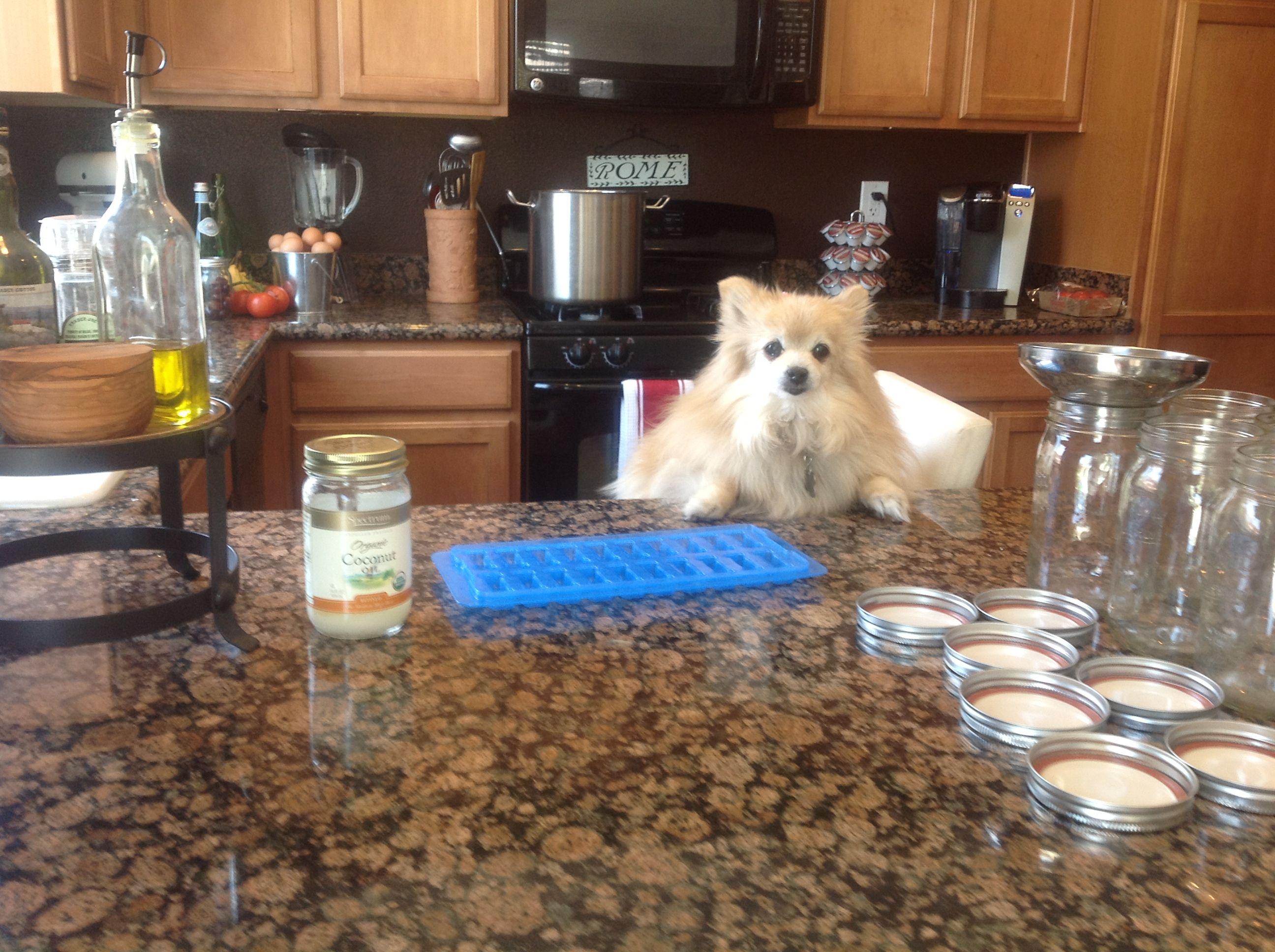 How to Make Cold Treats for Your Pomeranian Treats