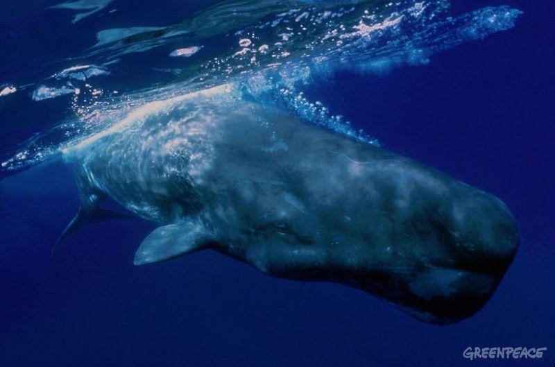 Information sperm whale