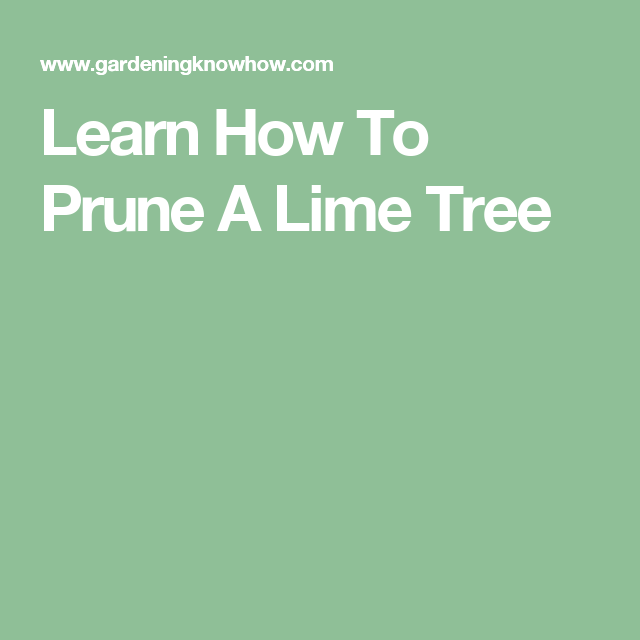 learn how to prune a lime tree
