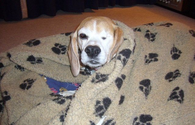 Petition Abolish The Breeding For Use Of Beagles For Animal
