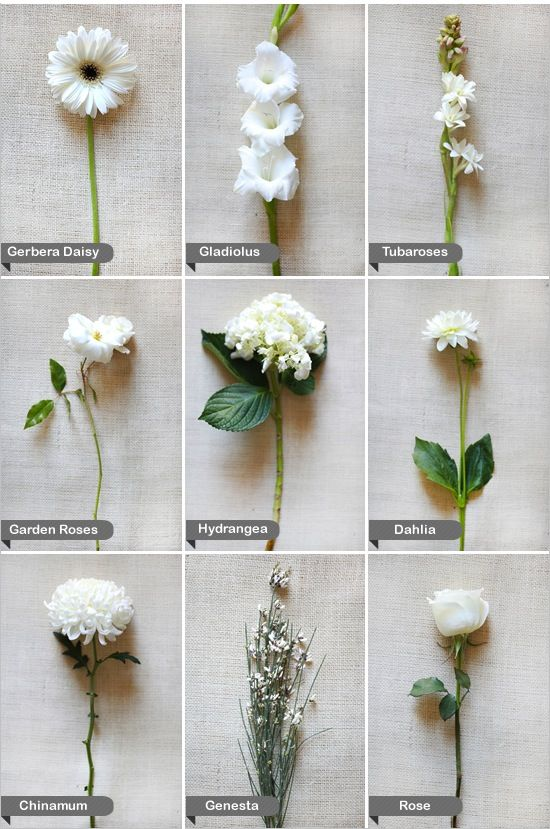 I Love White Flowers Want A Whole Garden Of Just