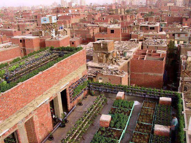Roof Top Gardens In Egypt Produce Food Roof Garden Green Roof Garden Photos