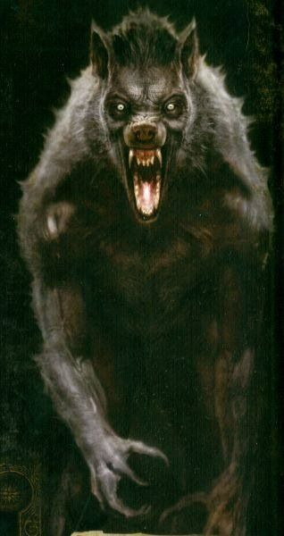 Werewolf   Werewolves   Pinterest   Werewolves, Wolf and Monsters