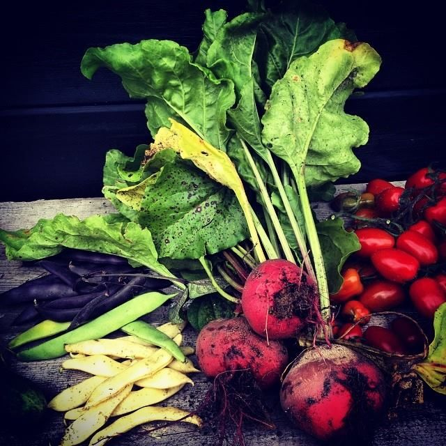 Harvest by Berta