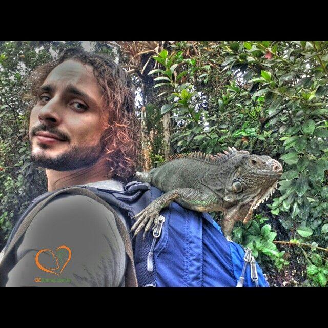 www.BEAnimal.com.br going for a walk indo dar um passeio :) #iguana #lizard #lagarto #BemEstarAnimal #animalwelfare #EducaçãoAmbiental #environmentaleducation #BEAnimal