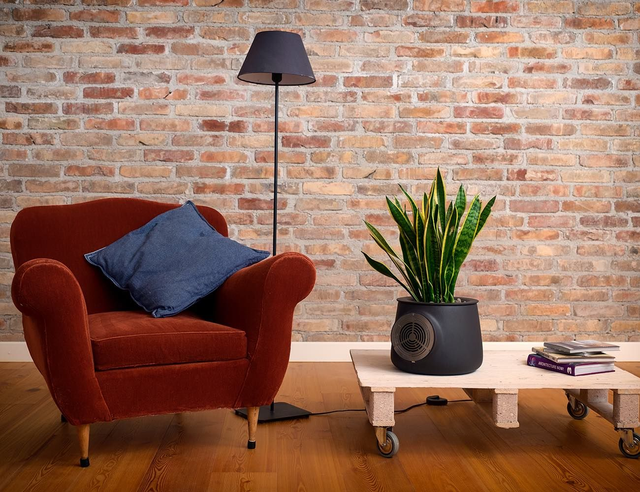 Clairy The Most Amazing Natural Air Purifier Natural