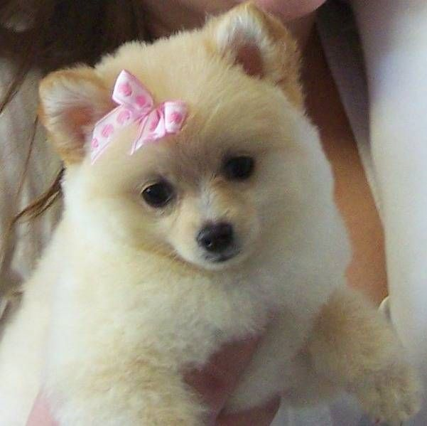 Pampered Puppy Dog Boarding Pampered Pet Grooming And Dog
