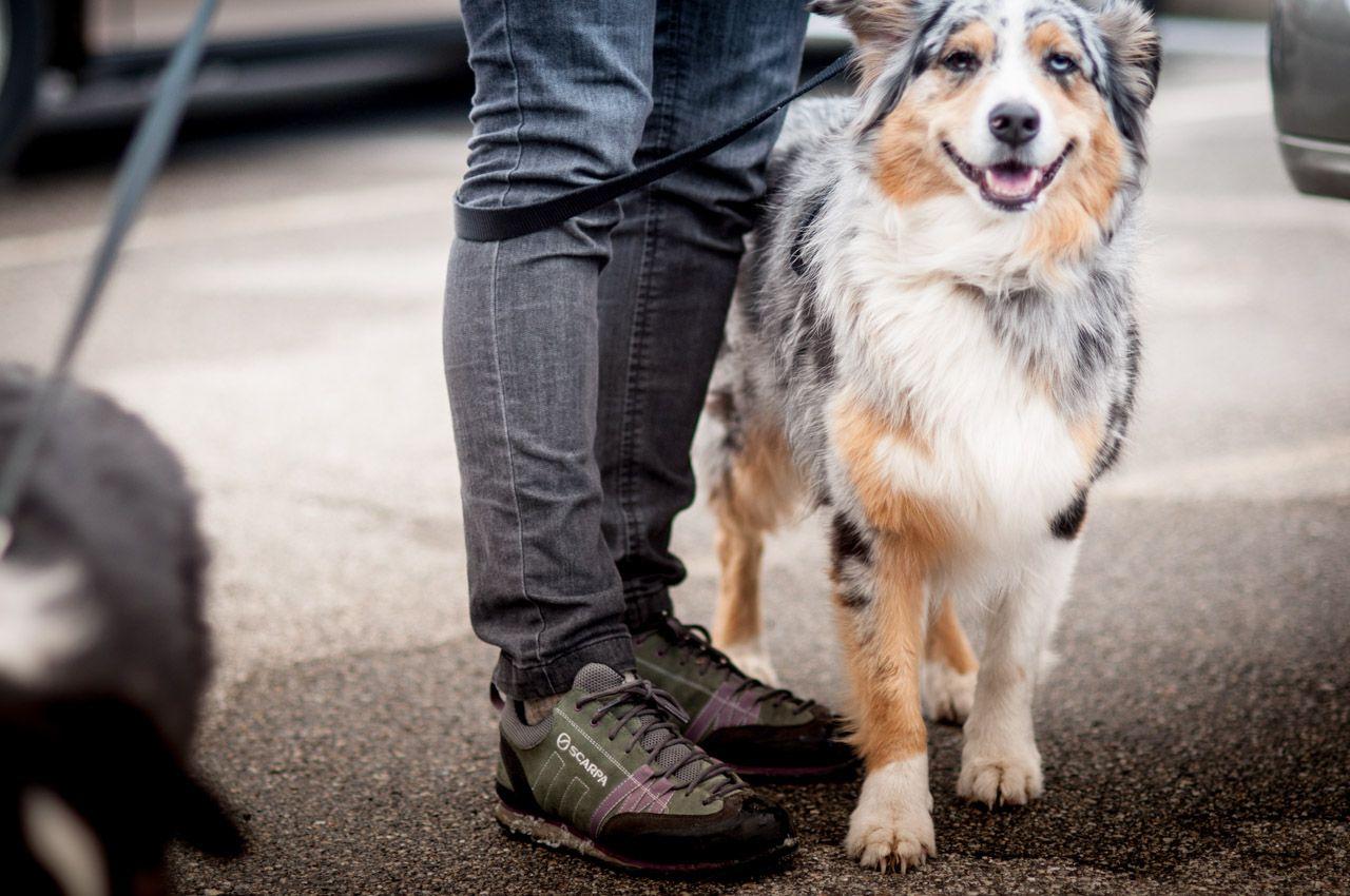 Photographer shawn melton nature of the dog gr dog