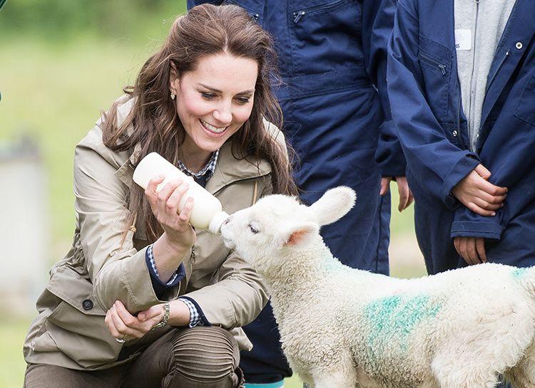 Кейт кормит ягненка   Герцогиня кейт, Кейт миддлтон