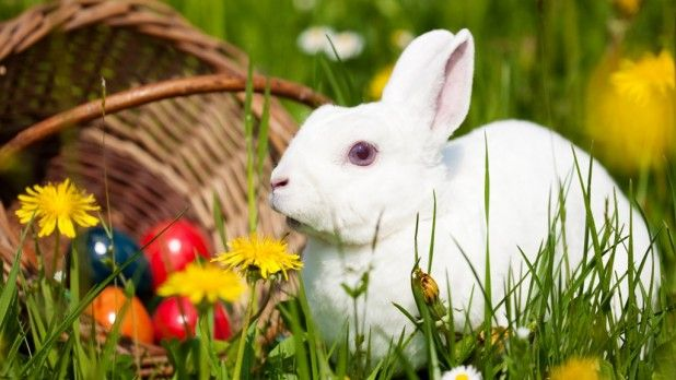 ostern in deutschland - Google Search | Cute easter bunny, Bunny pictures,  Rabbit wallpaper