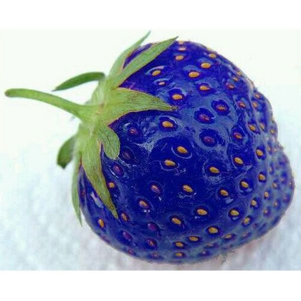 100PCS Sweet Blue Strawberry Seeds Nutritious Delicious Vegetables Berry Seed