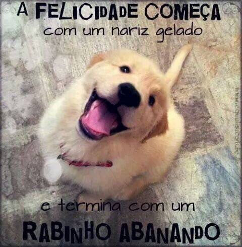 Famosos Pin de Francielle Andrade em Cachorrinhos :) | Pinterest  HD42