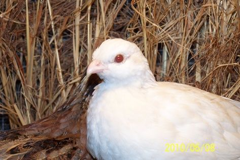 A-Z List of 125 Rare Albino Animals [Pics] #albinoanimals