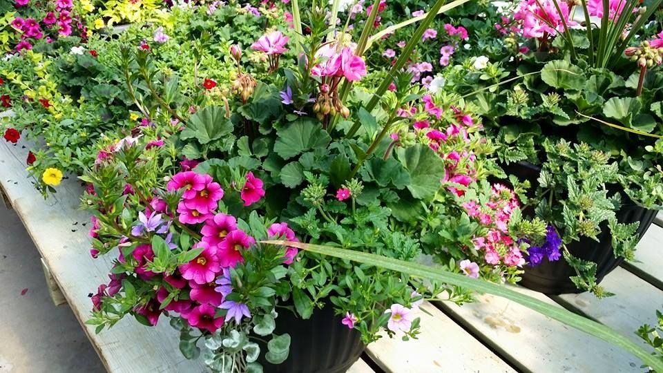 Up to 50% off remaining outdoor plants. Including hanging baskets and patio planters ‪#Orangevilleflowers #orangeville