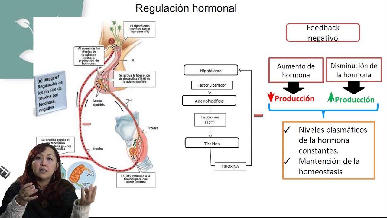 SISTEMA ENDOCRINO Y HORMONAS/BIOLOGÍA/CLASE 11 | Neurología y ...