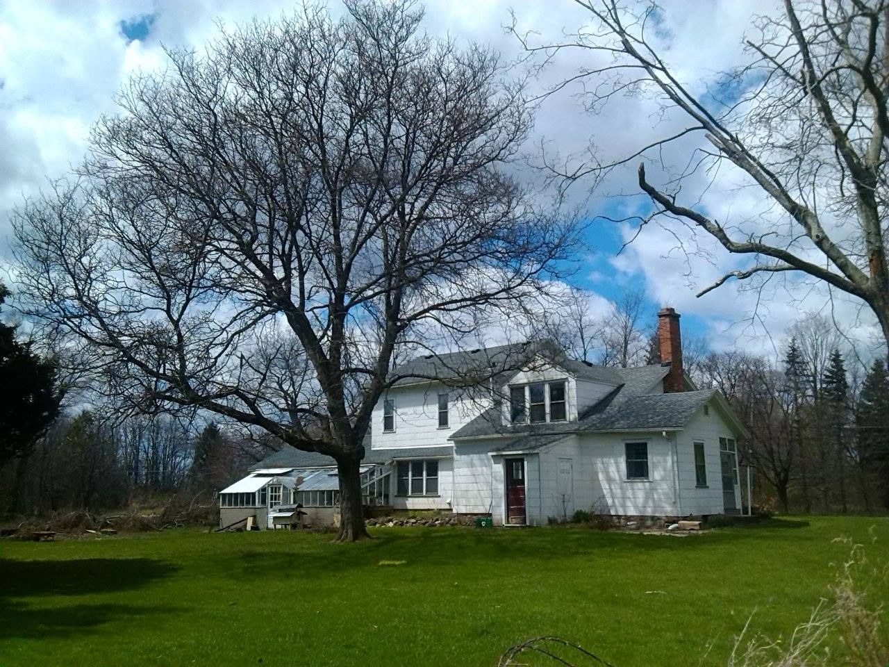 house from back with tree