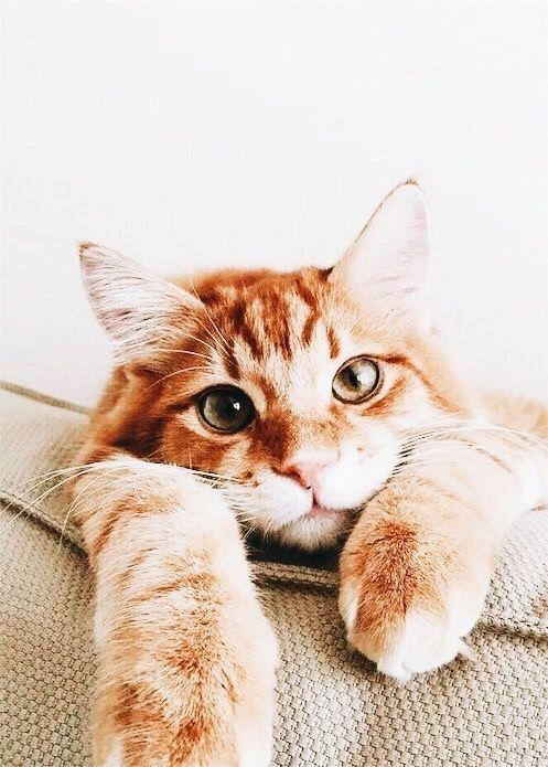 Pin Von Anna Duhrkoop Auf Katzen Tiere Katzen Baby Katzen
