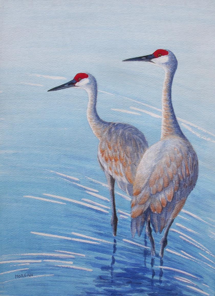 Sandhill Crane ' Alert' Nature Wildlife Watercolor Art Water Birds Cranes Painting