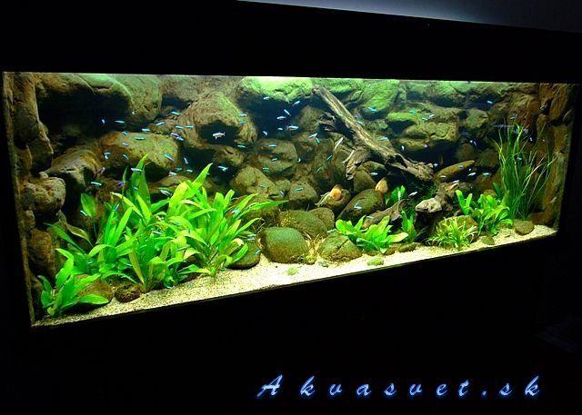 Amazon blackwater biotope amazon blackwater biotope for Amazon fish tank