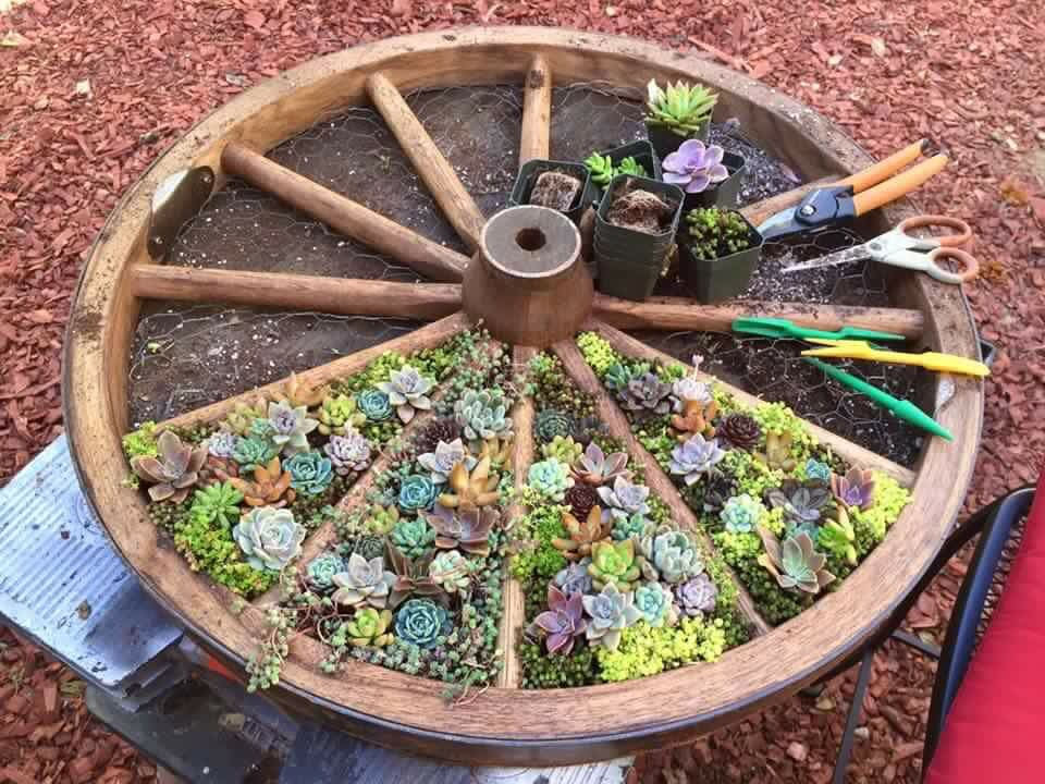 Wagon wheel succulent planter.