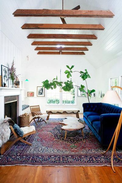 Add greens fiddle leaf fig living room farmhouse with chesterfield blue tufted sofa also grounding element white and ivory pinterest rooms