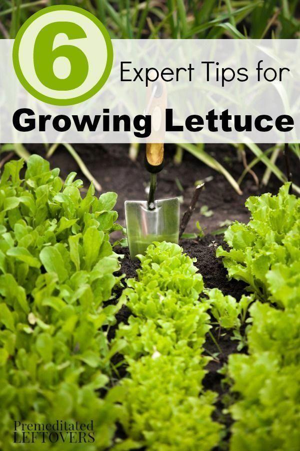 Organic Soil For Vegetable Garden Mybackyard Organic 400 x 300