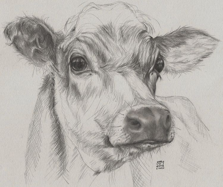 Quick drawing of a cow donated to a charity to raise funds to feed farm animals affected by flooding