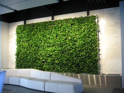 Superb The Ultimate Guide To Living Green Walls Ambius