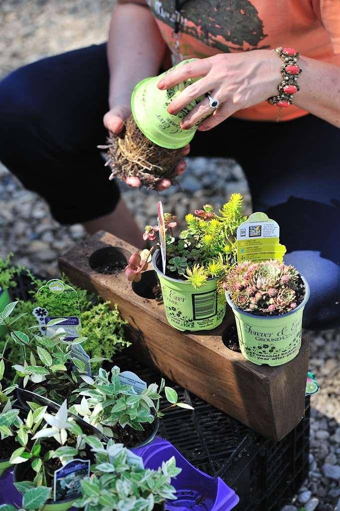 Fun planting project