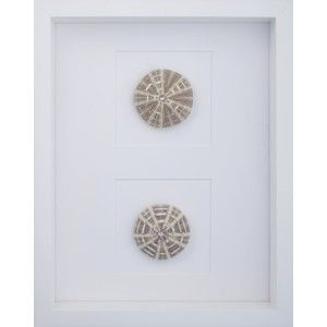 mirror image sea urchins with white shadow box frame - White Shadow Box Frame