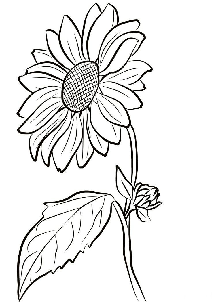 Spring Sunflower Coloring Pages  Sunflower drawing, Sunflower