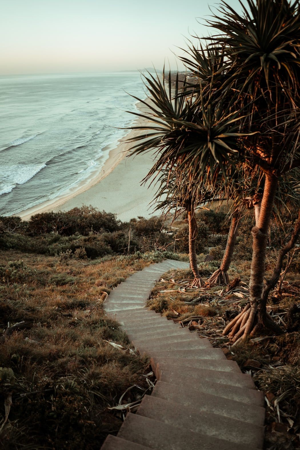 Green Palm Tree Near Sea During Daytime Photo Free Plant Image On Unsplash In 2020 Nature Photography Travel Aesthetic Photo