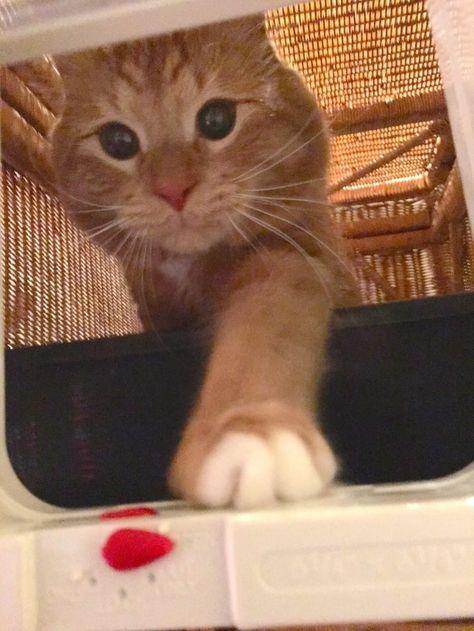 This Hidden Litter Box Is The Perfect Solution For Cat Lovers Who ...