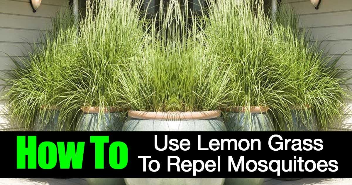 Does lemongrass repel mosquitoes mosquito repelling