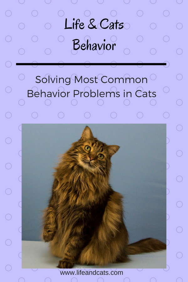 Behavior Problems in Cats, Solving most common behavior